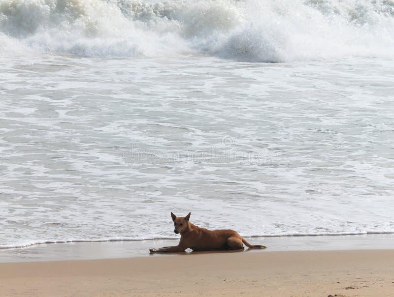 Cane sulla spiaggia del mare immagini stock libere da diritti