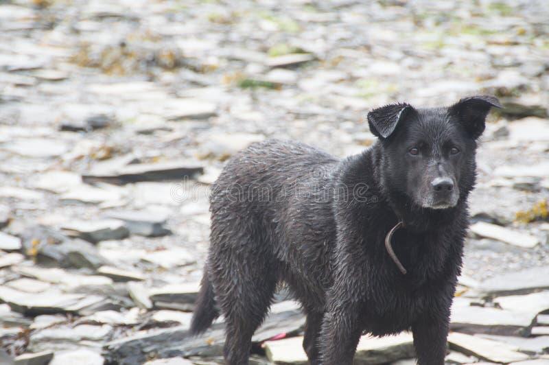 Cane sulle rocce fotografie stock libere da diritti
