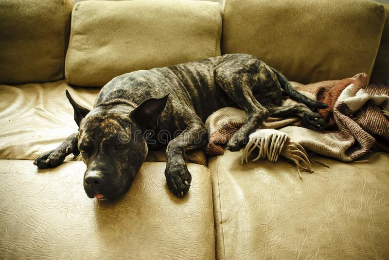 Cane sullo strato fotografia stock