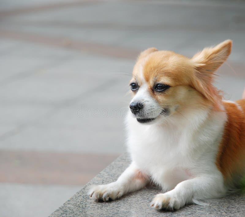 Cane sveglio fotografia stock libera da diritti