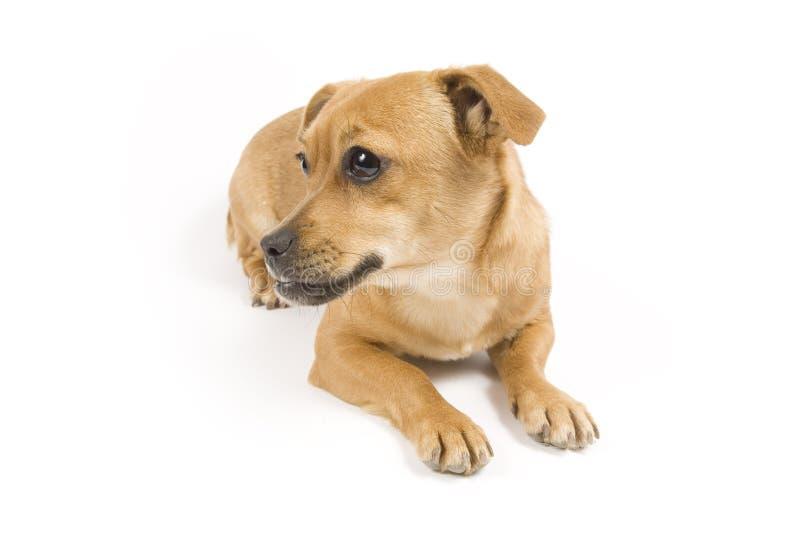 Download Cane sveglio immagine stock. Immagine di razza, animale - 7301283