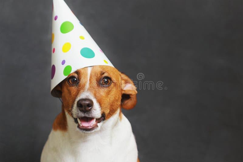 Cane sveglio in cappello del partito di carnevale fotografia stock libera da diritti