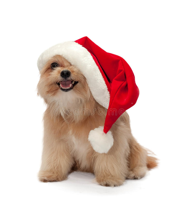 Cane sveglio in cappello di Natale fotografia stock