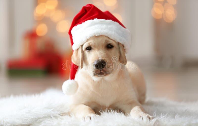 Cane sveglio in cappello di Santa Claus che si trova sulla coperta lanuginosa fotografia stock libera da diritti