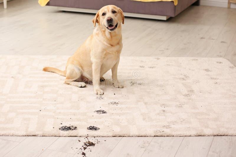 Cane sveglio che lascia le stampe fangose della zampa fotografia stock