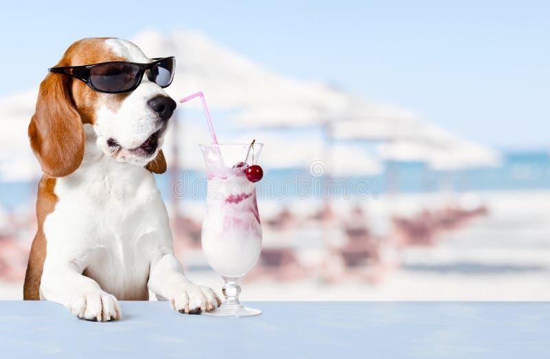 Cane sveglio in cocktail della bevanda degli occhiali da sole fotografia stock