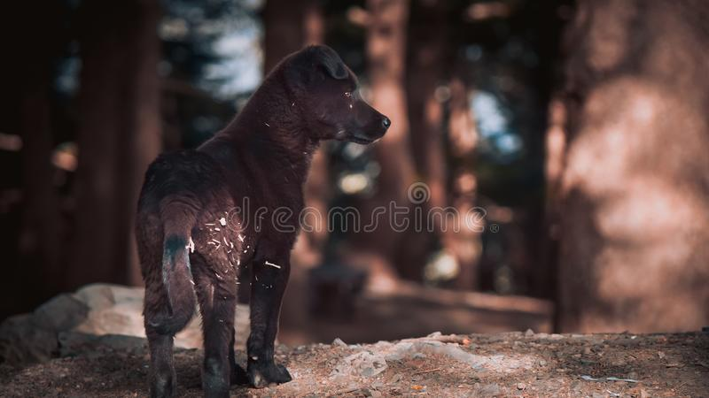 Cane sveglio di Brown giovane fotografia stock libera da diritti