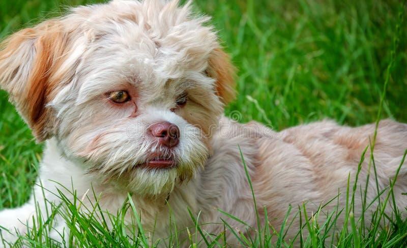 Cane sveglio dolce su erba verde fotografia stock