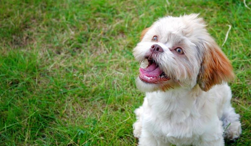 Cane sveglio dolce su erba verde immagini stock