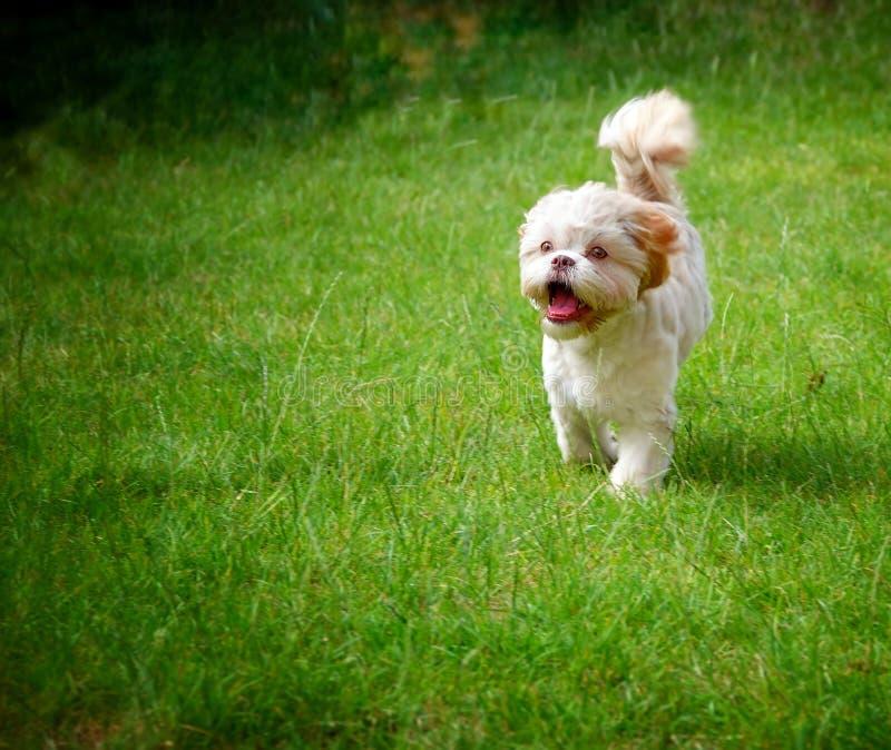 Cane sveglio dolce su erba verde immagine stock