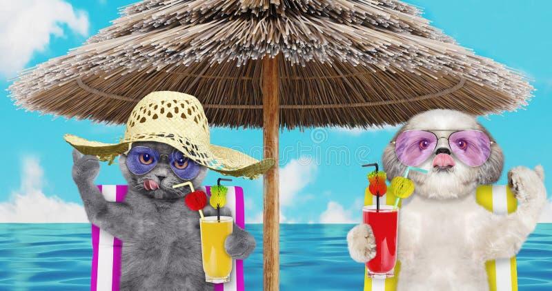 Cane sveglio e gatto che riposano e che si rilassano sulla sedia di spiaggia sotto l'ombrello con succo alla riva dell'oceano del fotografie stock libere da diritti