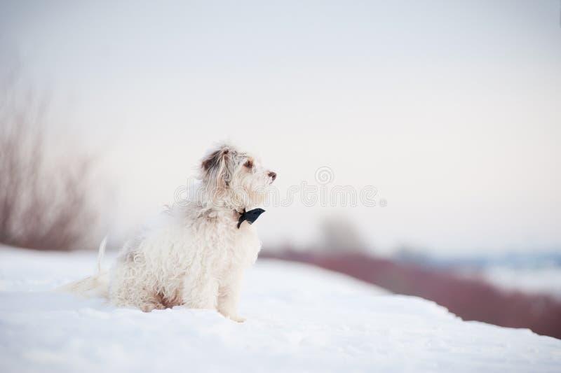 Cane sveglio elegante che indossa un sogno del legame fotografia stock