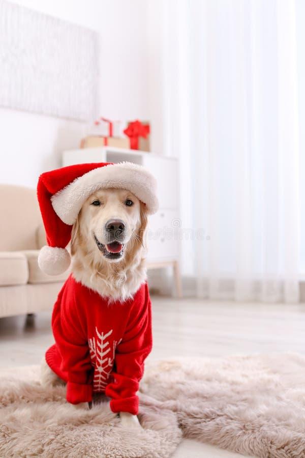 Cane sveglio in maglione e cappello caldi di Natale immagine stock