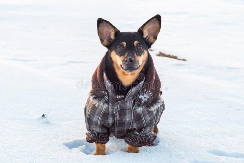 Cane sveglio nell'inverno con i vestiti fotografia stock libera da diritti