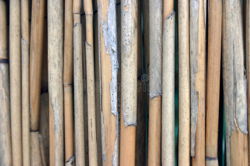 Download Cane texture stock image. Image of canes, lines, rhythm - 192421