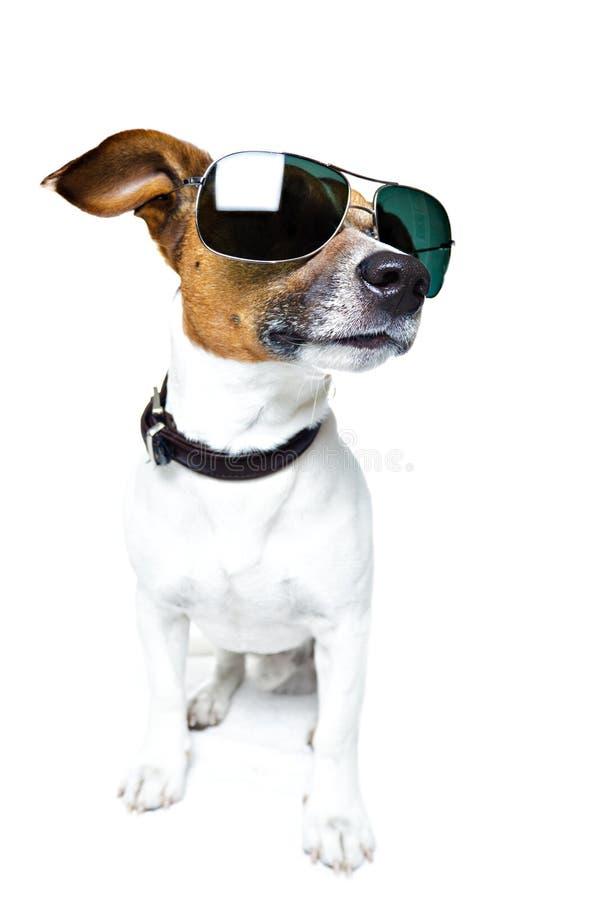Cane in tonalità fotografia stock libera da diritti