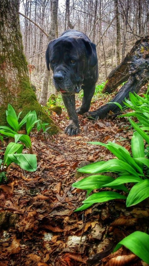 Cane in un aumento fotografie stock libere da diritti