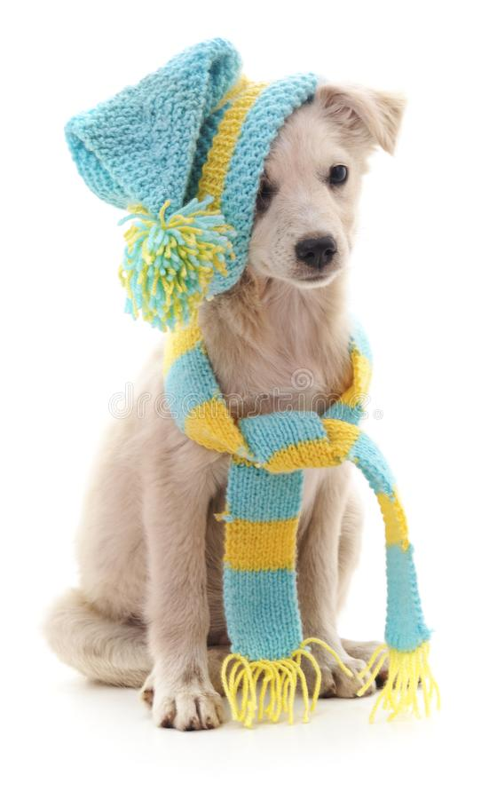 Cane in un cappuccio ed in una sciarpa fotografia stock