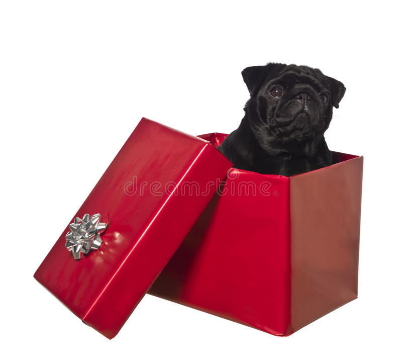 Cane in un contenitore di regalo fotografia stock