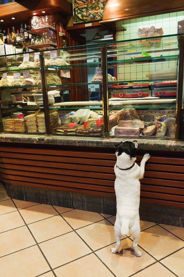 Cane veneziano della ghiottoneria fotografie stock