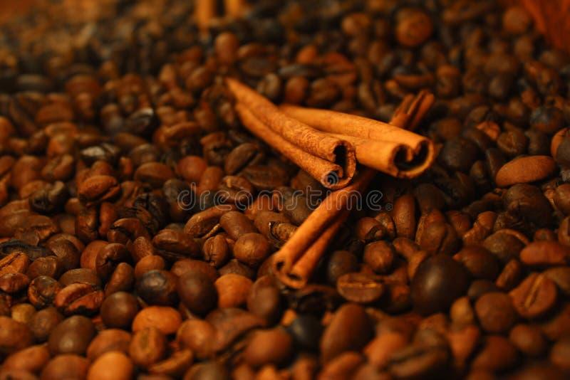 Canela do café imagens de stock