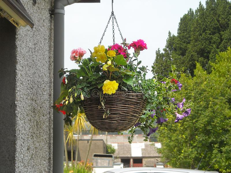 Canestri d'attaccatura dei fiori su un cottage Irlanda immagine stock libera da diritti