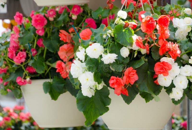Canestri del fiore in Redmond Town Center immagini stock