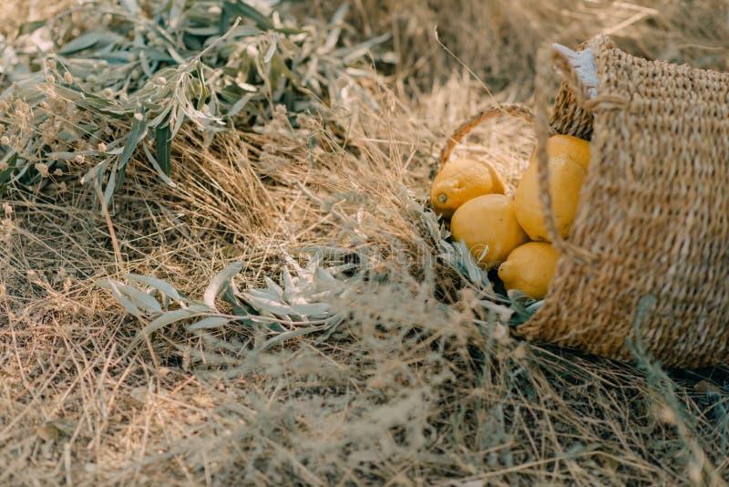 Canestro con i limoni fotografia stock libera da diritti