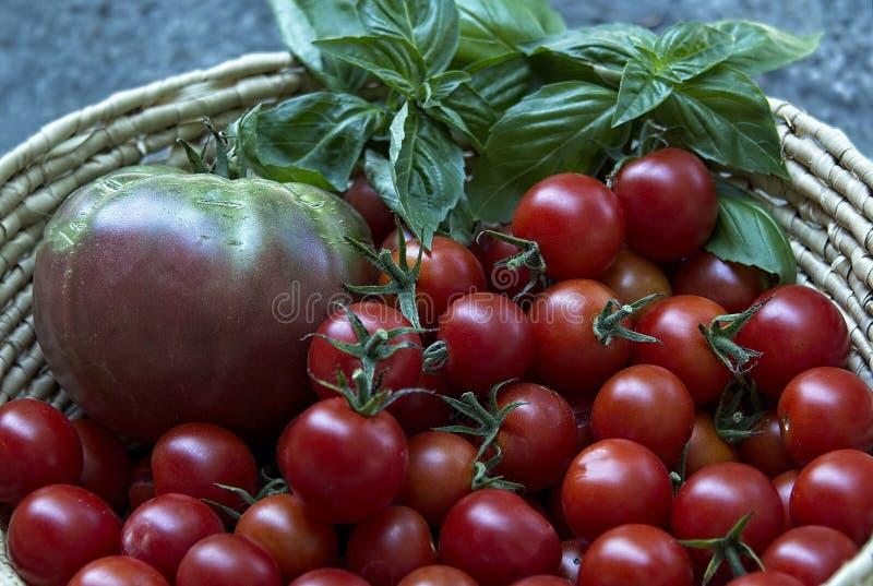 Canestro dei pomodori e del basilico immagini stock