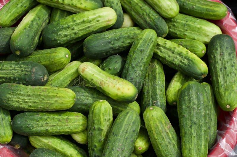 Canestro del selezionato di di recente, cetrioli coltivati azienda agricola fotografia stock