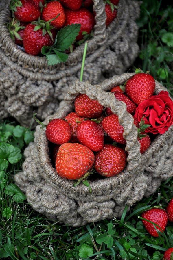 Canestro delle fragole fresche su un fondo di un giardino verde fotografia stock