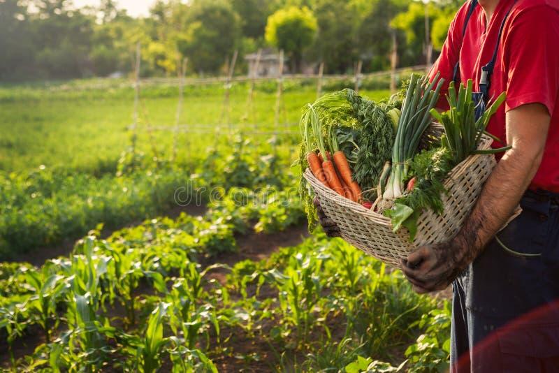Canestro di trasporto dell'uomo con le verdure immagine stock libera da diritti
