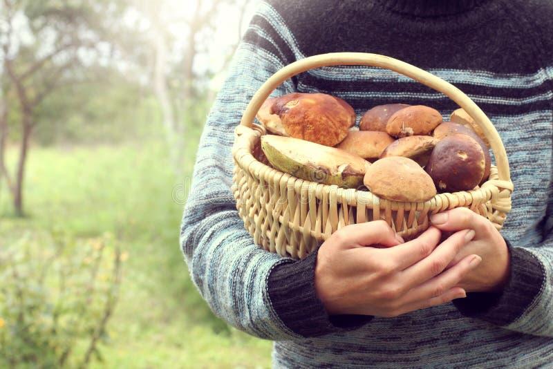 Canestro di vimini in pieno dei funghi bianchi nelle mani di una raccoglitrice del fungo che ritorna a casa dall'alimento di spec fotografie stock libere da diritti