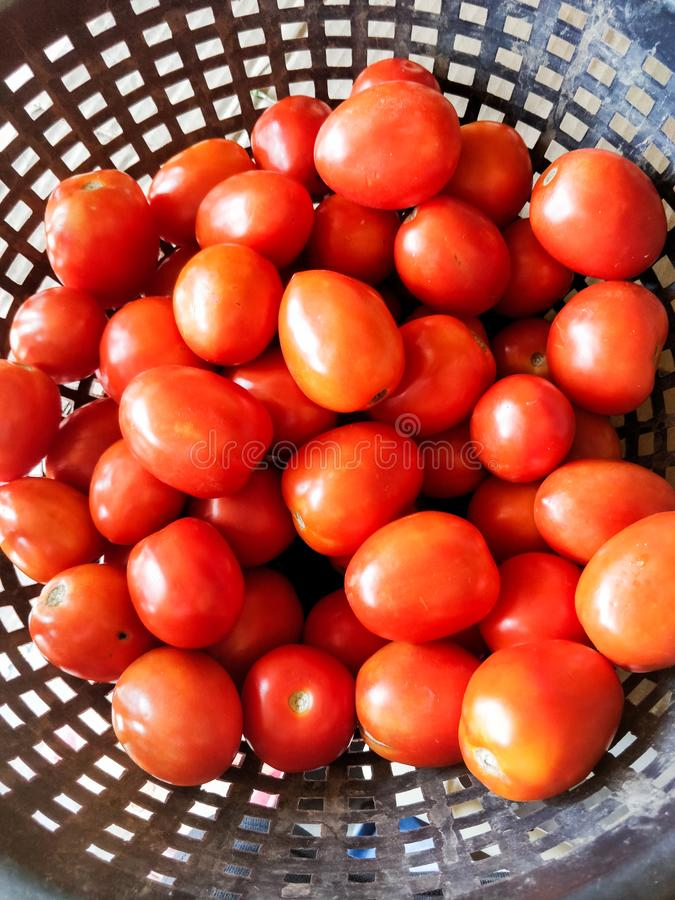 Canestro in pieno dei pomodori commestibili immagini stock