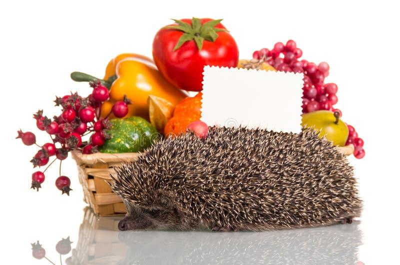 Canestro in pieno di frutta e della carta in bianco delle verdure per la scrittura, accanto all'istrice piccolo divertente isolat immagini stock libere da diritti