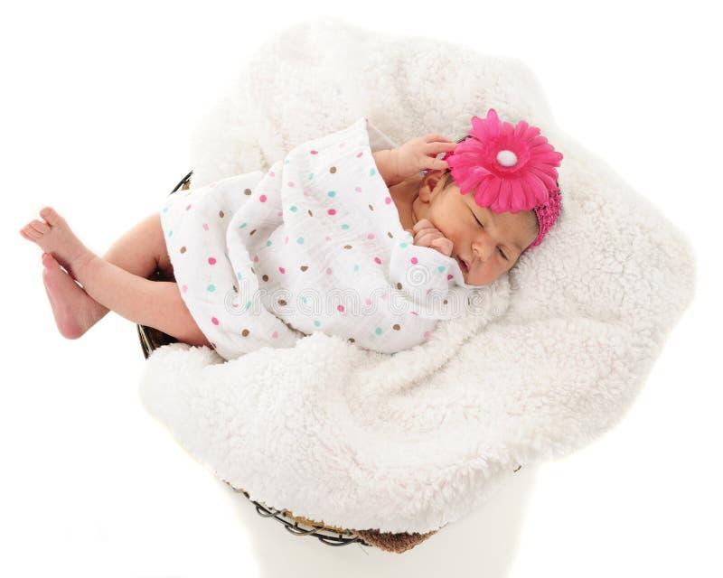 Canestro in pieno di neonato fotografia stock libera da diritti