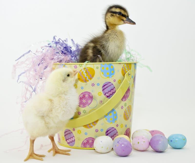 Caneton et Ckick de Pâques image libre de droits