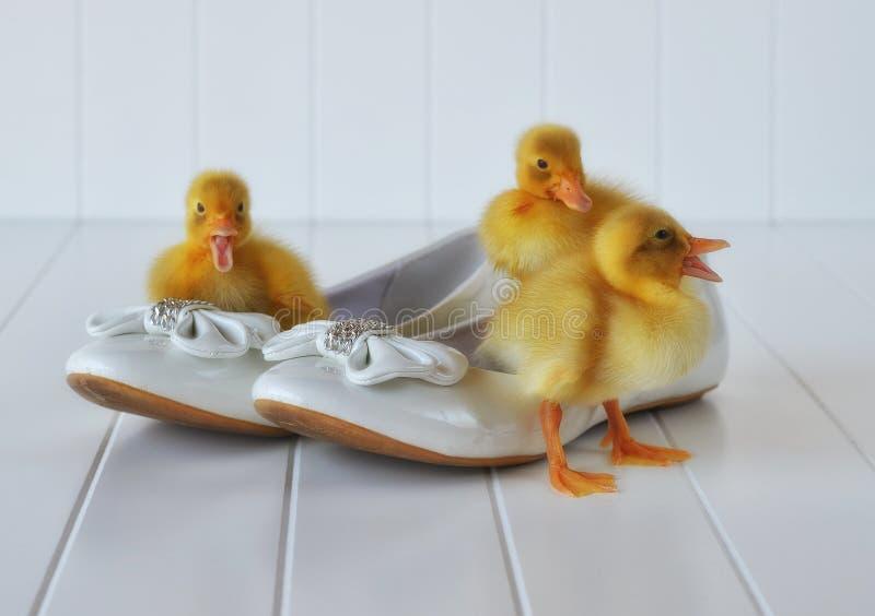 Canetons et chaussures de Pâques photo libre de droits