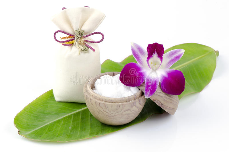 Canfora (cinnamomum camphora (L.) JS Presl). immagini stock libere da diritti