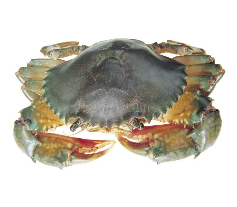 Download Cangrejo foto de archivo. Imagen de cocinero, marina, garras - 7275302
