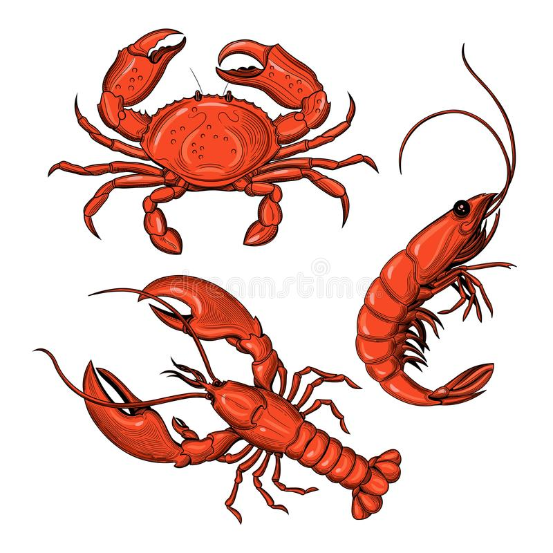 Cangrejo, camarón, langosta Mariscos stock de ilustración