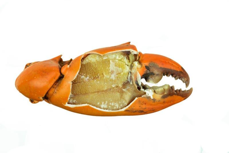 Cangrejo cocinado de la garra pelado aparte imagenes de archivo