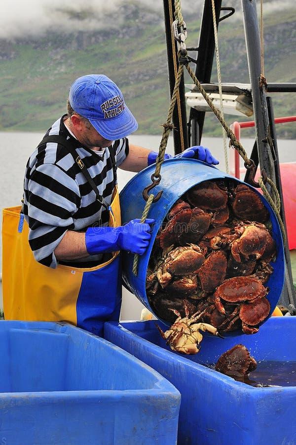 Pescador escocés del cangrejo (pagurus del cáncer) fotos de archivo