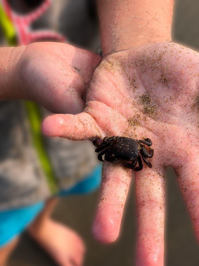 Cangrejo de arena marino con arena y mano infantil fotografía de archivo