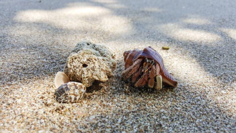Cangrejo de ermitaño en la playa imagen de archivo