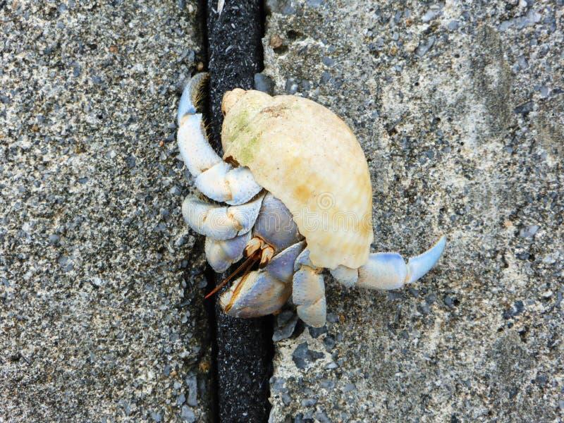 Cangrejo de ermitaño en la playa, Onna, Okinawa imagen de archivo libre de regalías