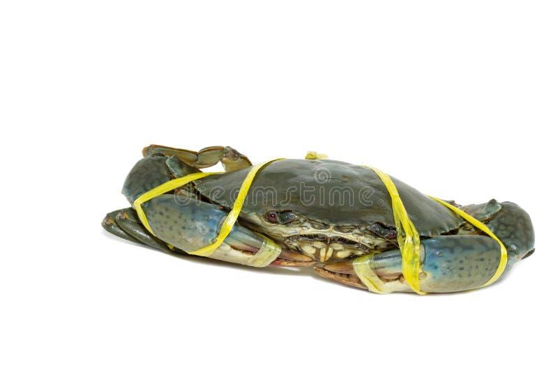 Cangrejo negro crudo atado con amarillo de la cuerda en el fondo blanco imagen de archivo libre de regalías