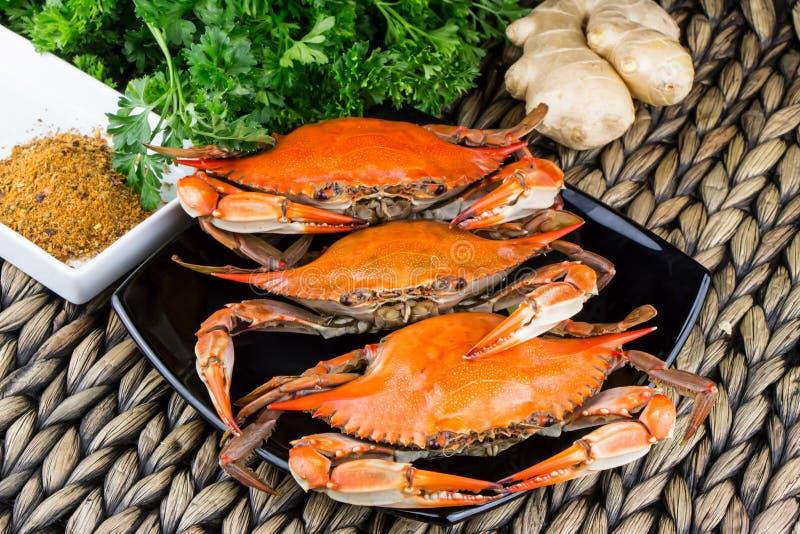 Cangrejos azules cocidos al vapor calientes con el jengibre Cangrejos de Maryland Cocinado y preparado fotografía de archivo