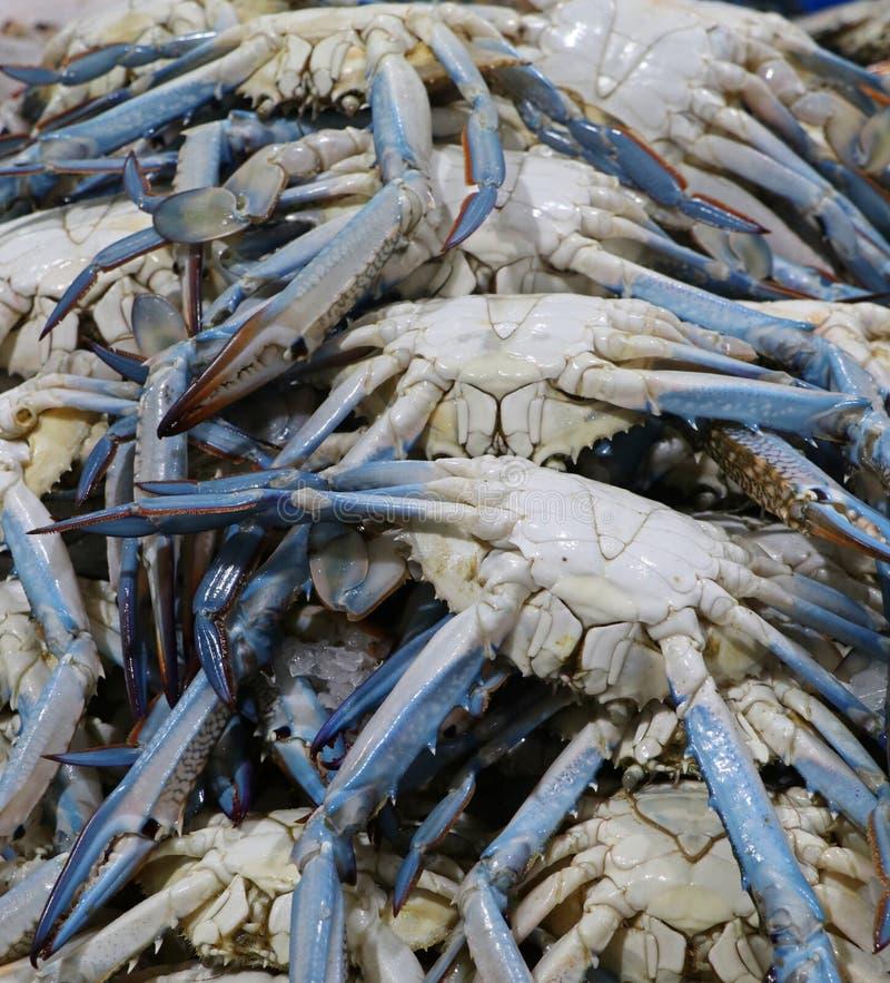 Cangrejos azules para la venta en una parada del mercado imagen de archivo