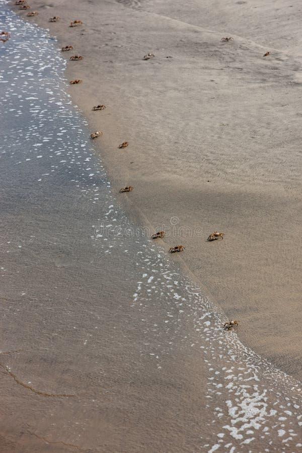 Cangrejos a caminar en la playa Visto desde arriba foto de archivo libre de regalías
